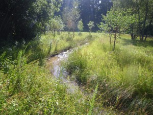 Wash-Creek-Vegetation-Year-1